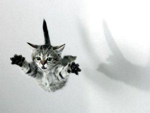 gato cayendo